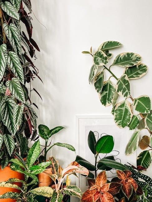 Giardino in casa