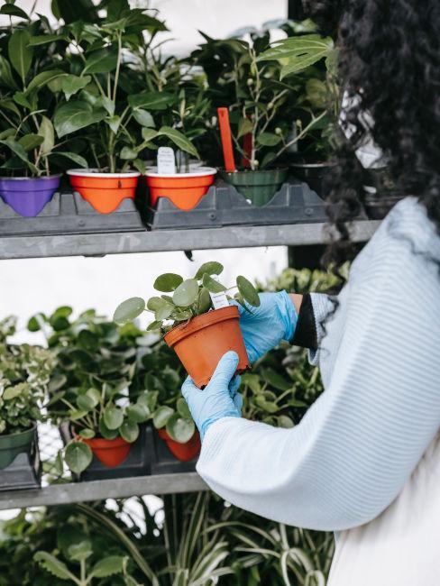Esempi piante da giardino