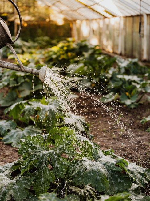 importanza irrigazione