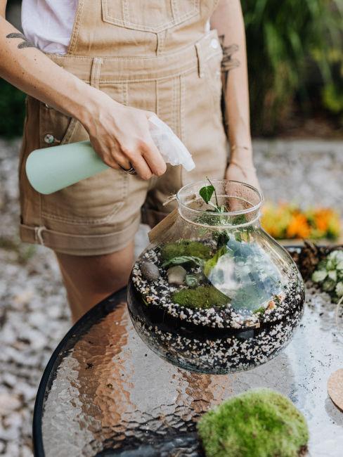 Decori e cura delle piante