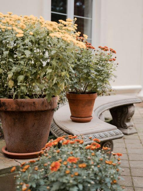 Esempio vasi in terracotta con fiori