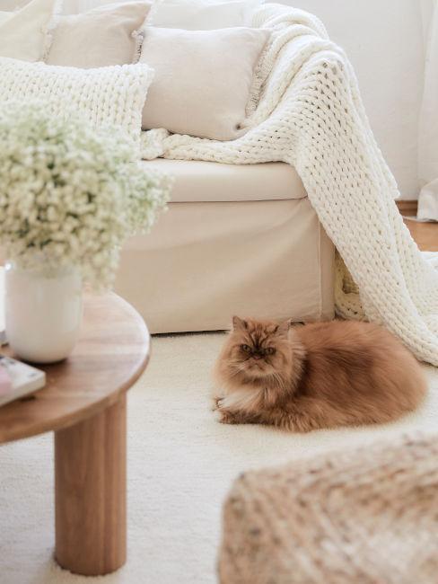 Gatto a pelo lungo in soggiorno