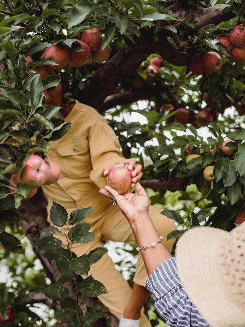 melo per giardino