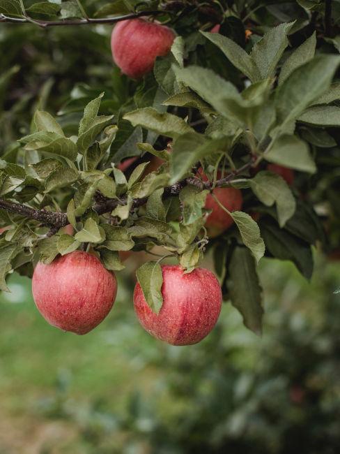 melo per giardino sensoriale