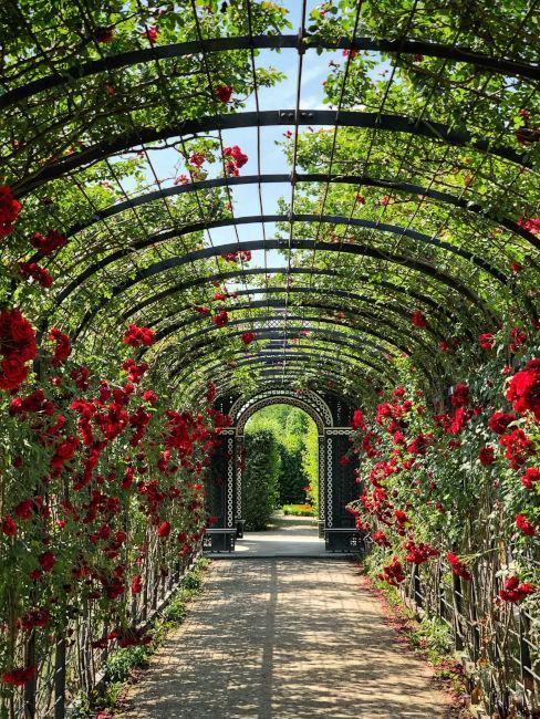 cammineto giardino sensoriale