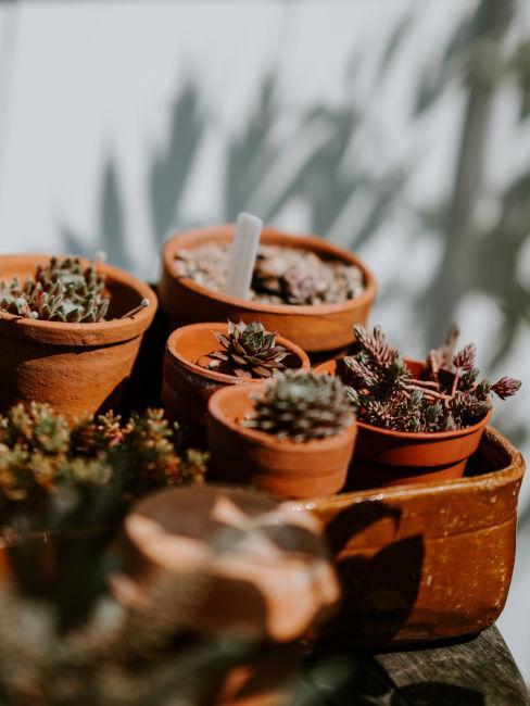 Decoro giardino con set piccoli vasi