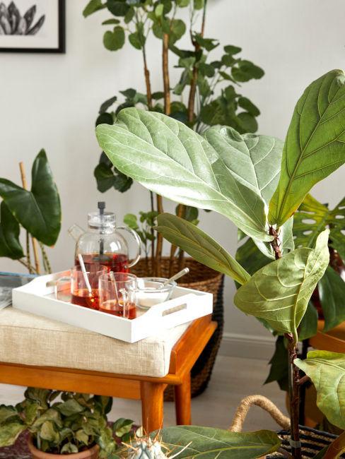 Dettaglio piante per salotto