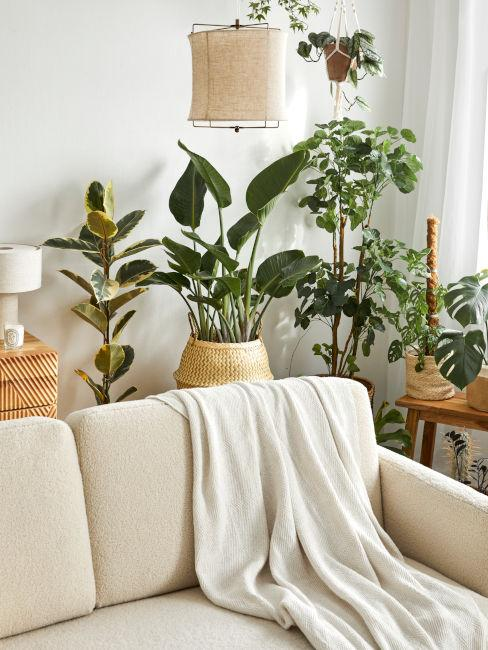 ricreare un giardino d'inverno in salotto