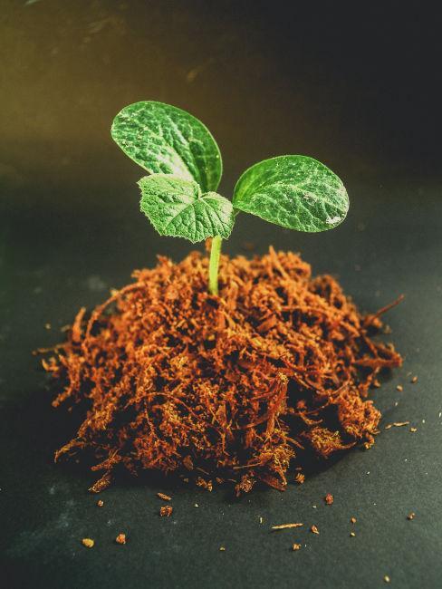 Germoglio che cresce dalla terra