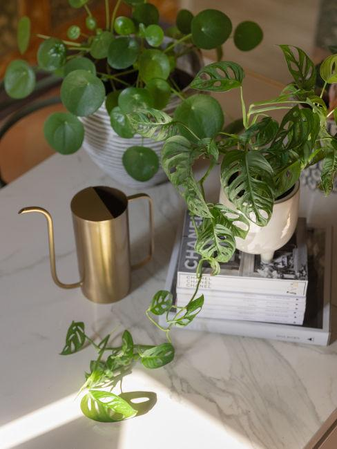 Angolo verde in casa