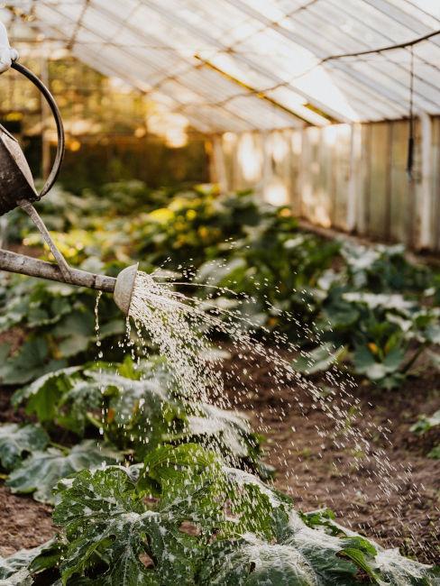 serra protezione piante dal gelo