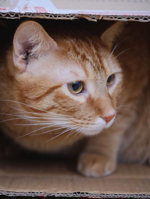 Cuccia per gatti in cartone
