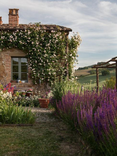 Giardino con lavanda ed erbe aromatiche