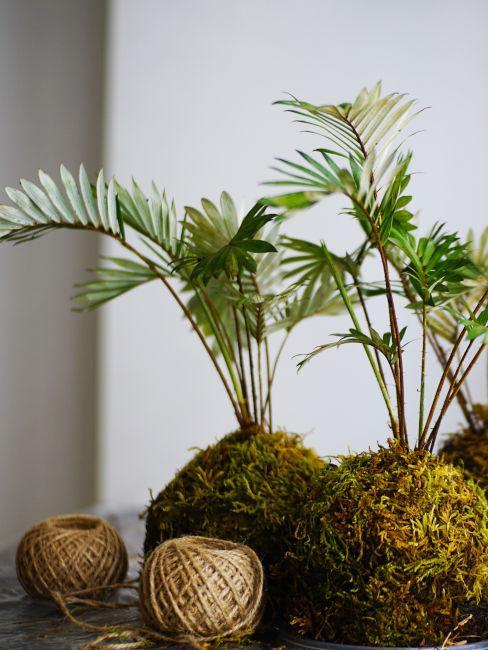 pratica giapponese appendere piante da interno