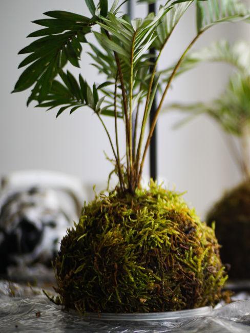 piante da interno pensili con metodo giapponese