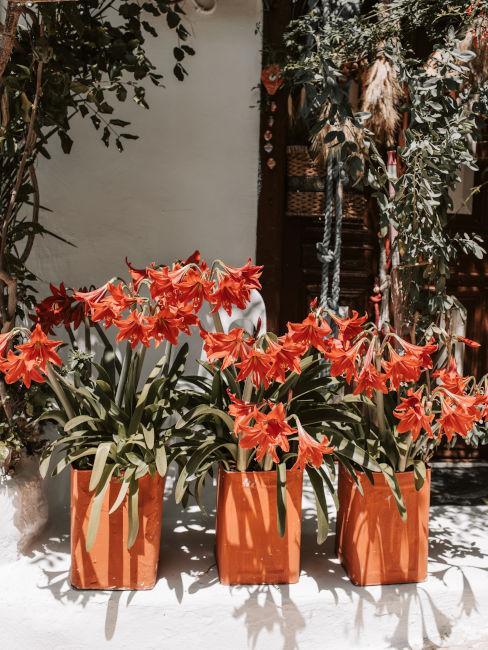 fiori d'arancio da decorazione