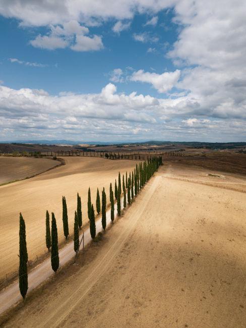 strada in toscana con alberi e campi