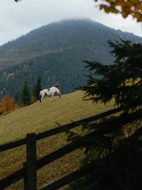 recinto con cavalli in montagna