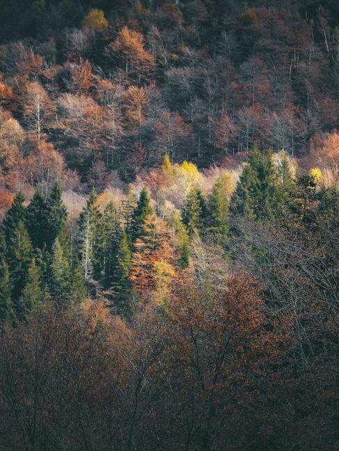vista dall'alto su un bosco in autunno