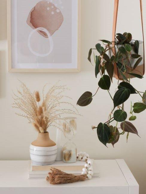 the white honey home piante