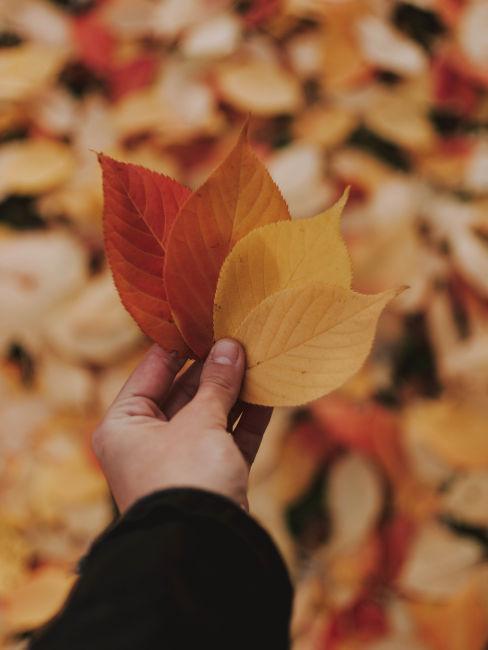 mano che tiene foglie gialle