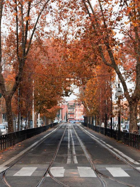 strada in autunno con alberi