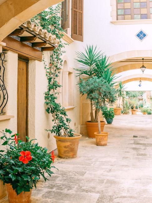 ingresso esterno con piante