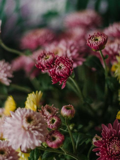 fiori colorati decorativi