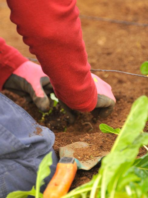semina per orto