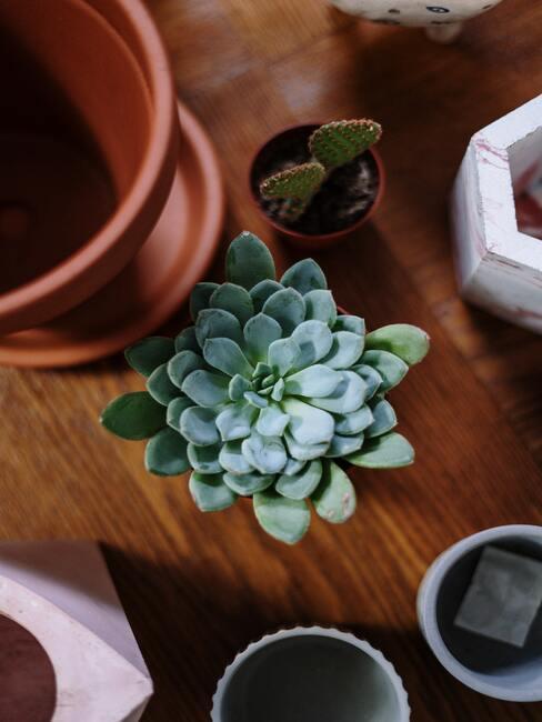 Planten in plantenpotten op dressoir