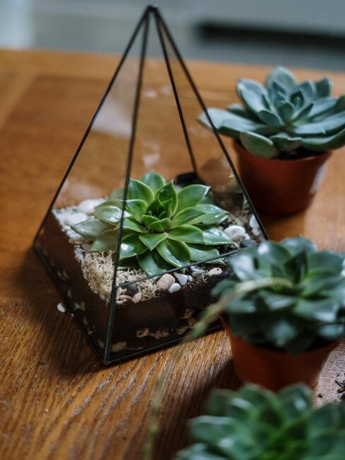 Vetplanten op houten stoel