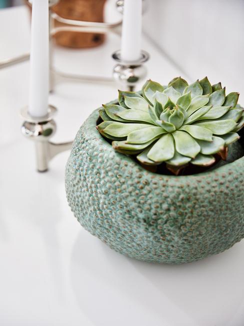 Succulent in groene pot