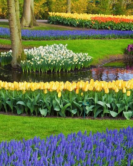 bloembed met bloemen in verschillende kleuren en een boom