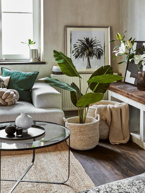luchtzuiverende plant in woonkamer