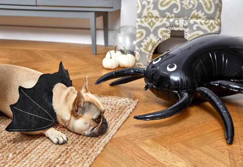 Halloween spin met hond met vleugels op vloerkleed