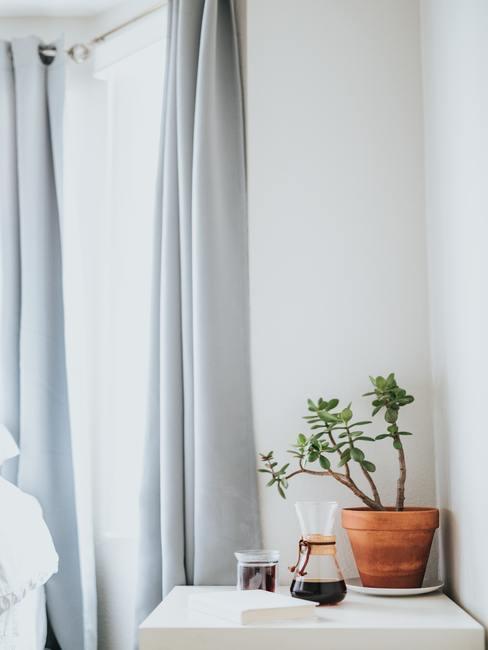 Gordijnen wit maken: lichtblauw gordijn naast een plant in een pot