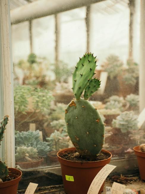 Cactus op de achtergrond van andere planten