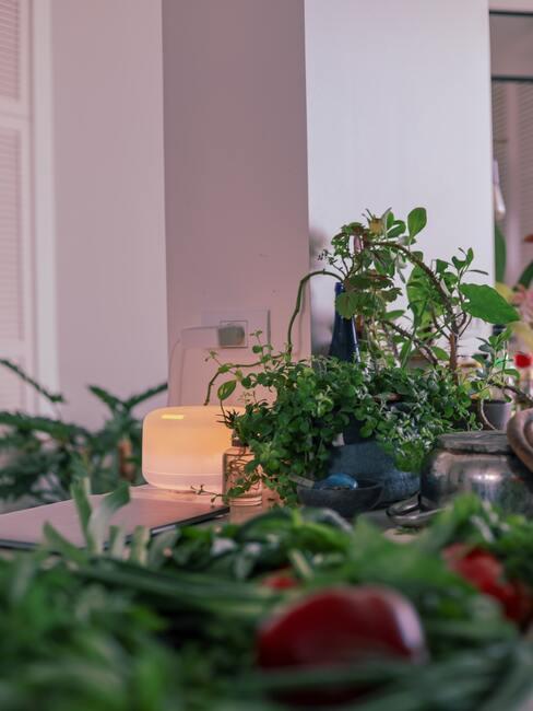 verbeter het binnenklimaat in je huis door het gebruik van veel planten en een luchtzuiveringsapparaat