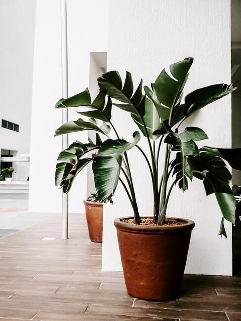Groene plant in huis voor een beter binnenklimaat