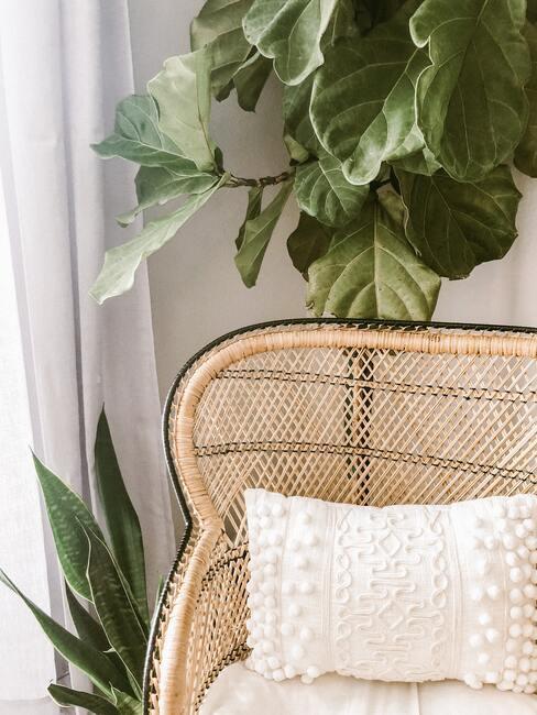 Rotan stoel met zachte kussen naast een groene plant
