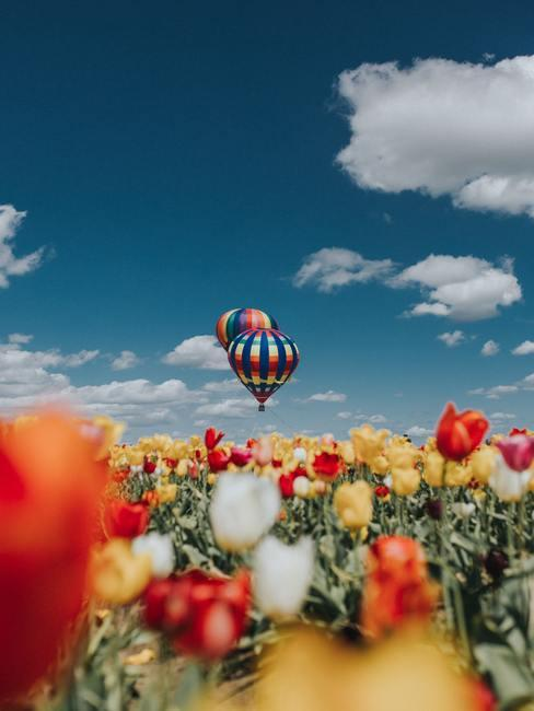 Veelkleurige tulpen in Nederland met een luchtballon op de achtergrond