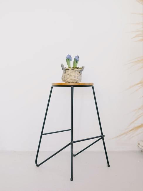 Cactus in een pot op een bijzettafel