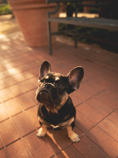 Hond zit op tuintegels