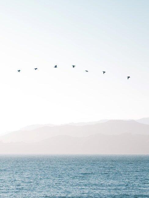 vogels in een heldere lucht
