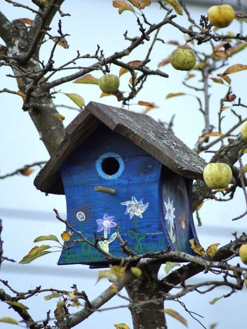 blauw vogelhuisje in fruitboom