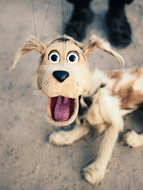 Surprise maken hond