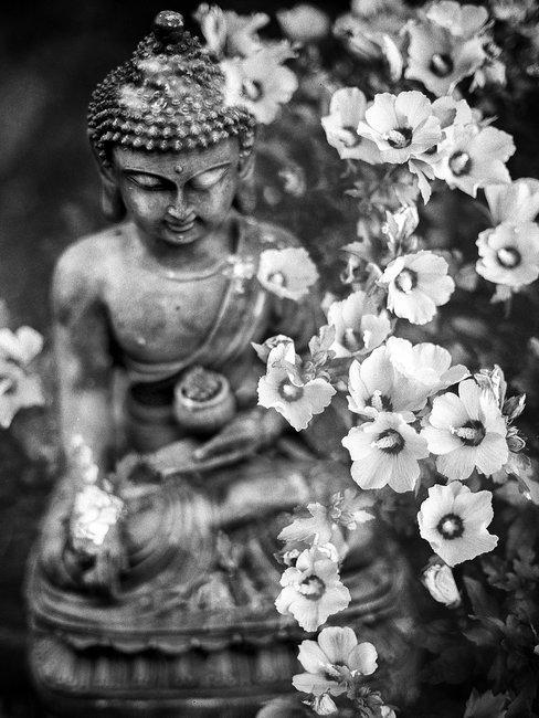 zwart witte buddha met bloemen
