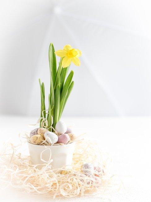 Witte ruimte met 1 Hyacint in witte bloempot met paaseieren