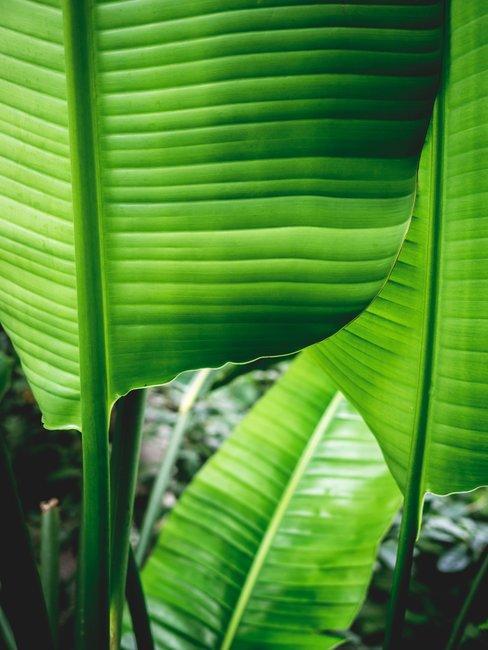 groenen plantenbladeren