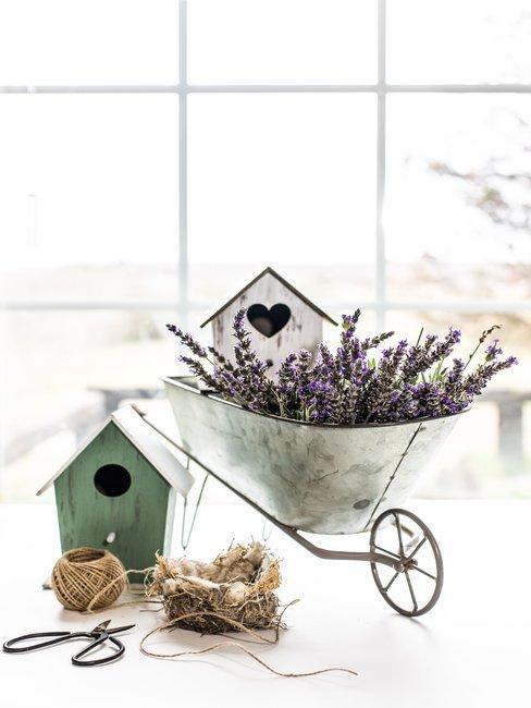 Wit en groen vogelhuis in stalen kleine kruiwagen met lavendel op witte achtergrond